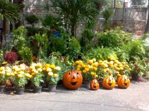 Flores de cempaxúchitl y Halloween