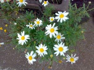 Flores para los Difuntos